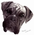 The Dog Boxer by DonLatArt