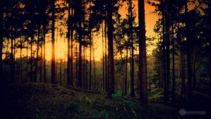 Sunset in the Woods by db-photoblogDOTcom