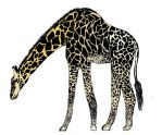 Ceth's Giraffe- Natural Colour by Kirozip