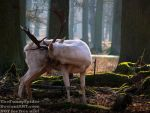 White Stag being too shy for photos by TheFunnySpider