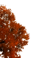 763 Autumn Tree Cutout 02 by Tigers-stock