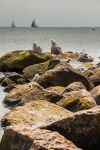 Seagull Stone Scape by FrlMahlzeit
