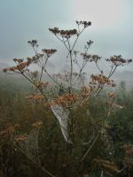 Cobwebs in the fog 4 by Philosopher-Vinni