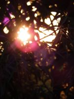 Lens Flare Sunset by Cookiee1991
