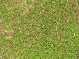 00038 - Mossy Green Forest Ground by emstock