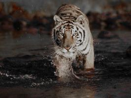 Tiger Crossing Creek by clipse101