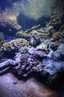 Sea life Stock 39 (private use) by Malleni-Stock