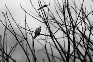 Lonely bird 2 by michaelbarbosa