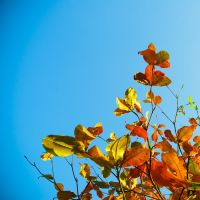 blue sky and leaf by carpenters