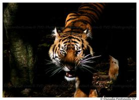 Binjai's anger by TVD-Photography