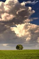 The Lonely Tree by IsacGoulart