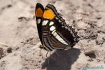 Butterfly Dude by Moohoodles
