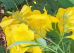 Just some yellow flowers on a bush by Wael-sa
