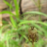 Wishing Will Make it So by TheMarchStudios
