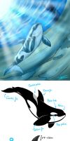 Orcas X3 by Mimy92Sonadow