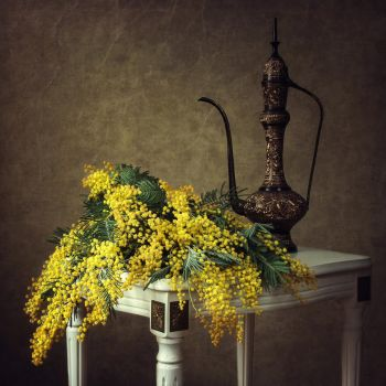 Variations on a bouquet of mimosa by Daykiney