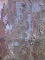 Bark Texture 2 by Siobhan68