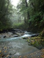 Alfred River Gorge by LiquidityImages