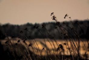 flowers from last year by Tjabula