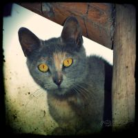 Minino by Wendybell80