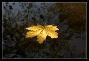 Leaf on the Water... by LcN