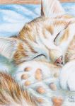 ACEO Ginger Cat Dreams by sschukina