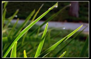 Morning Dew by Athdil