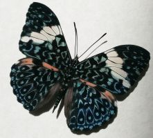 Hamadryas Arinome Blue Paisley Cracker Butterfly by YourFramedButterfly