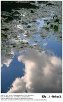 Lily Pads on Pond by Della-Stock