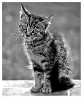 Kitty II In Black And White by SuloinenEnkeli