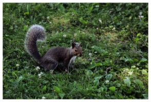Squirrel 2 by morphinetears36