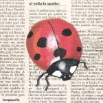 Ladybug by fungopolly