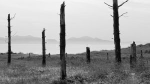 Newborough 2 by paulblythe