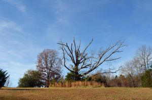 Old Tree Premade Background Stock Photo 0064 WideV by annamae22