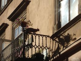 Cat in Lvov by MArt120