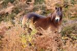 Exmoor Pony by JakeSpain