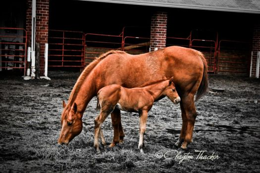 Mother and baby by cthacker