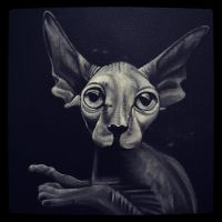 Hairless cat  by lollipoppopper