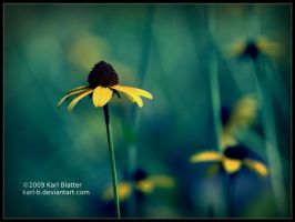 Black-Eyed Susan by Karl-B