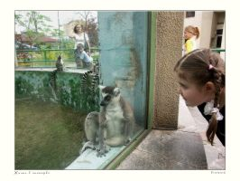 Life in Zoo 21 by firework