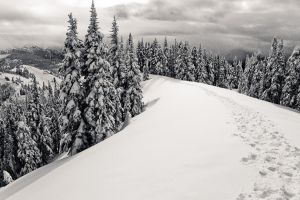 Hurricane Ridge SE by elpez7