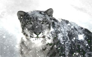 SnowLeopard Painting Wallpaper by PimArt