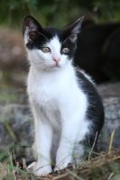 Cat Stock 45 by Malleni-Stock