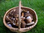 Octobre 2013 - Basket of mushrooms by HermitCrabStock