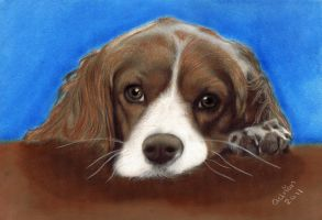 spaniel commission by ADRIANSportraits