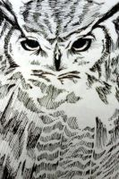 Great Horned Owl by TamaKage