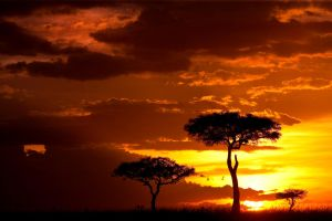My Africa 37 by catman-suha