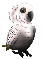 Cockatoo by AnAppleForgotten
