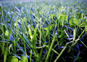 grass by Equipage