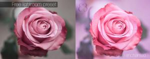 Soft rose lightroom preset by EliseEnchanted